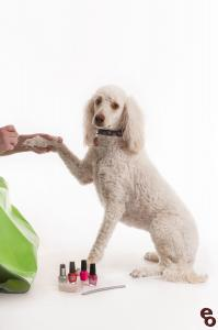 Painting Nails Poodle