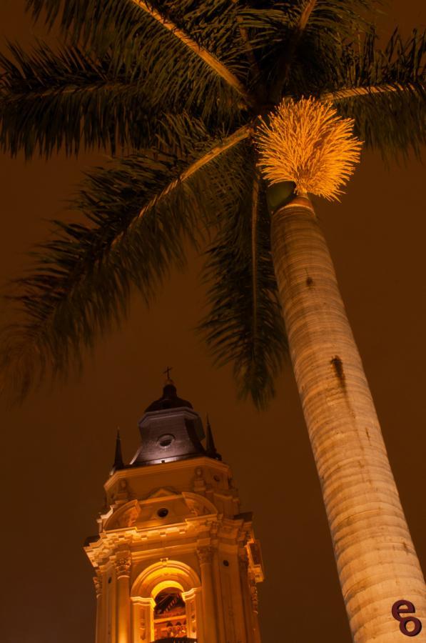 Plaza Palm