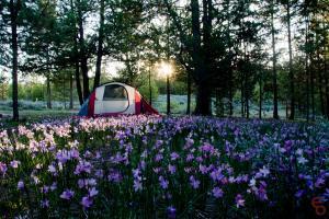 Tent Purple Field